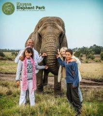 animals-knysna-elephant-park.jpg